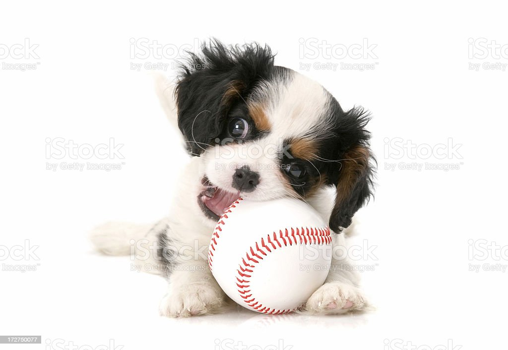 time to baseball royalty-free stock photo