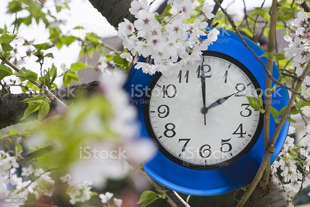 time to bloom royalty-free stock photo