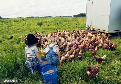 Shot of two little children feeding chickens on a farm