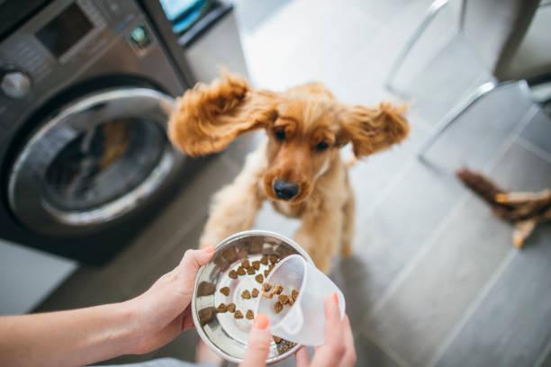 Time to feed the dog picture id1164915209?b=1&k=6&m=1164915209&s=612x612&w=0&h=wnwoji9kp1n8q1j n9vzau 7kyf2i4uxclwbf4hhii4=
