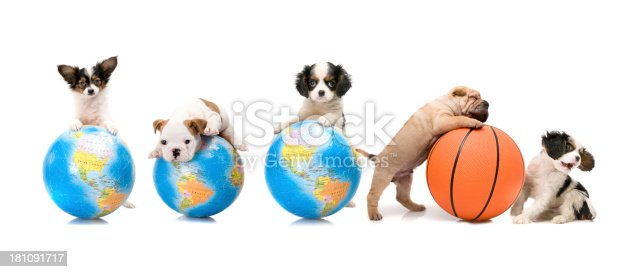 little dogs and puzzle world with basket ball