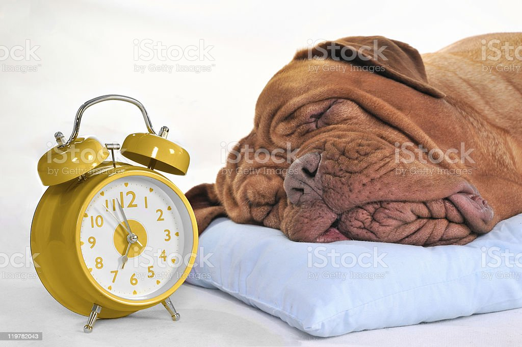 Time to Wake-Up? stock photo