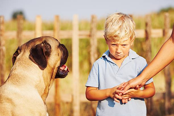 Timid boy Timid boy is holding of the mother on the garden. cane corso stock pictures, royalty-free photos & images