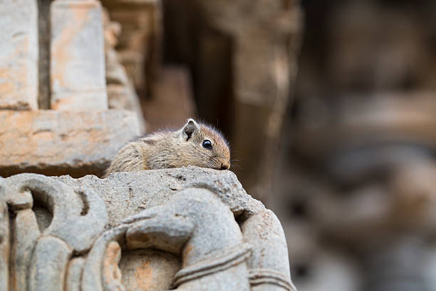 Timid Squirrel stock photo