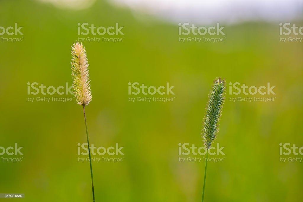 Timothy hays stock photo