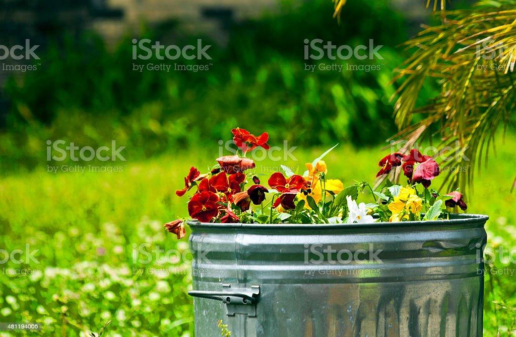 Tin Planter stock photo