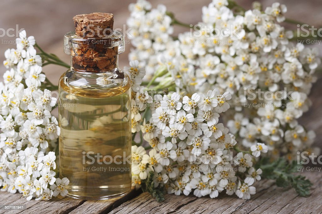 Tincture of yarrow in the bottle close-up horizontal stock photo