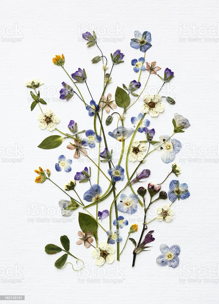 Tiny Blue Flowers Arrangement stock photo