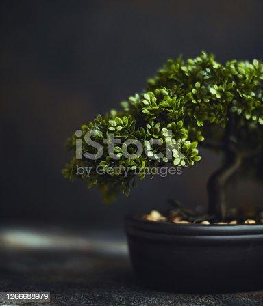 Tiny bonsai tree