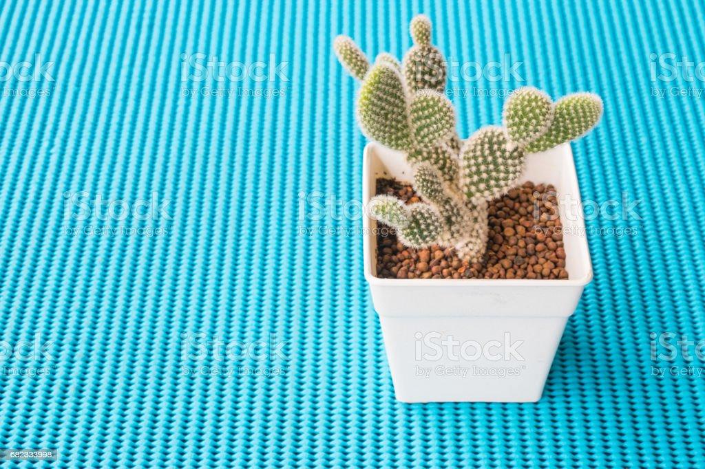 Een kleine cactus op een blauwe achtergrond. royalty free stockfoto