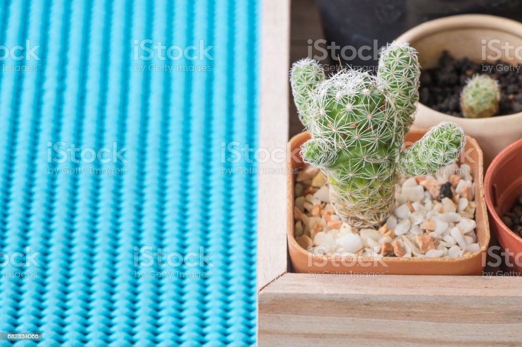 A tiny cactus on a blue background. zbiór zdjęć royalty-free