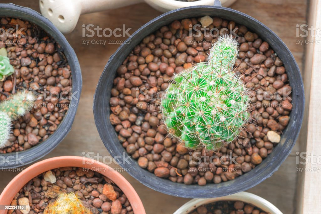 A tiny cactus on a blue background. foto stock royalty-free