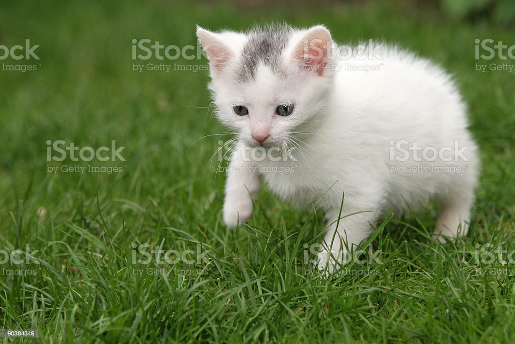 Tiny cat a little bit scared royalty-free stock photo