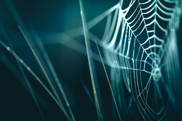 tiny dew droplets stuck in spiderweb / cobweb, extreme close-up - spider web stock photos and pictures