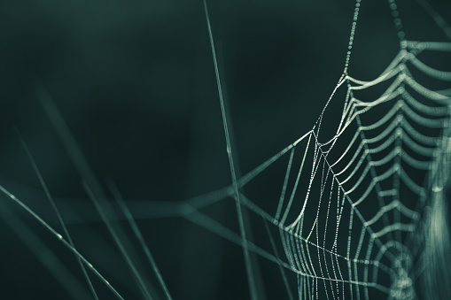 Tiny dew droplets stuck in spiderweb / cobweb, extreme close-up