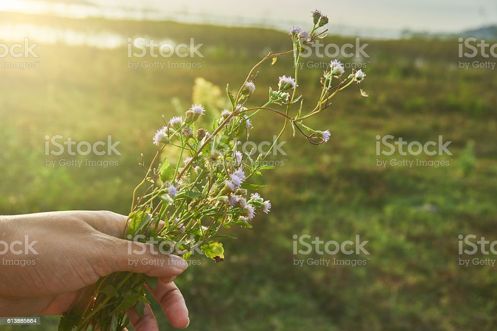 Tiny flowers in hand under rim light stock photo