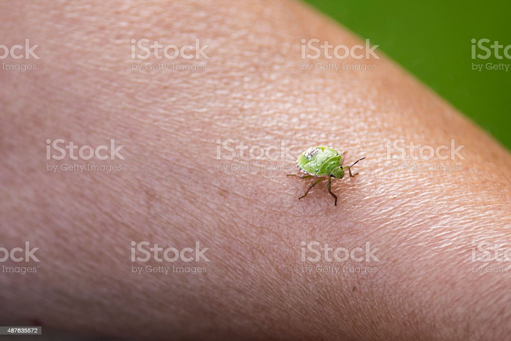 Tiny Green Bedbug On A Female Arm Stock Photo - Download Image Now