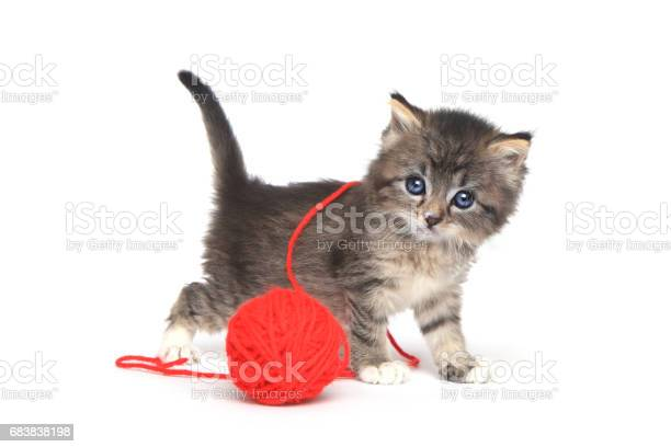 Tiny kitten playing with red ball of yarn picture id683838198?b=1&k=6&m=683838198&s=612x612&h=cv3aprq1wlxgz0tyvy2m84sa1awywnochh1acnocons=
