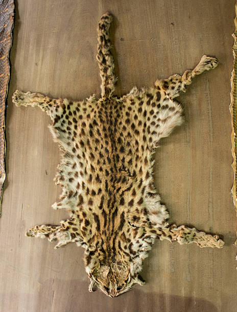 tiny leopard tiger fur on the table for home decoration. - tiger fur stock photos and pictures
