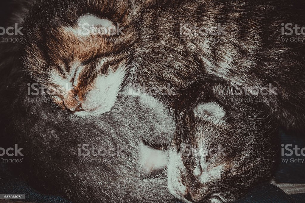 Tiny newborn kittens stock photo