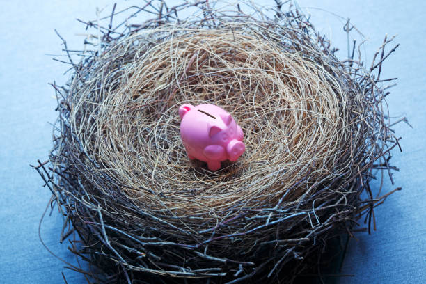 Tiny Piggy Bank In A Bird's Nest A tiny pink piggy bank sits in the middle of a bird's nest that suggests an insufficient nest egg. nest egg stock pictures, royalty-free photos & images