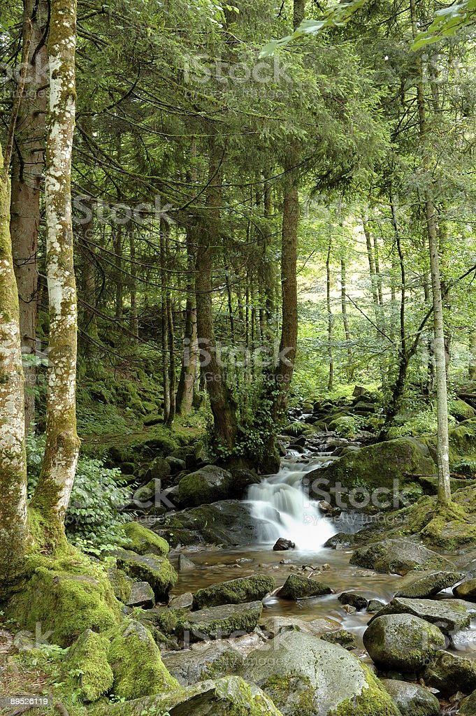 Tiny River fall in the forest 2/2 royalty-free stock photo