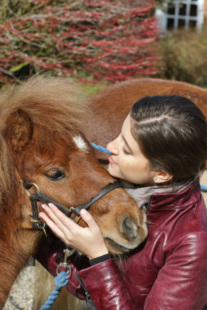 tiny shetland pony hugged by russian outdoor girl - whiteway pony stock photos and pictures