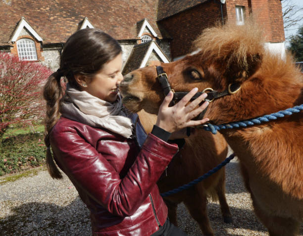 tiny shetland pony nuzzling russian outdoor girl - whiteway pony stock photos and pictures