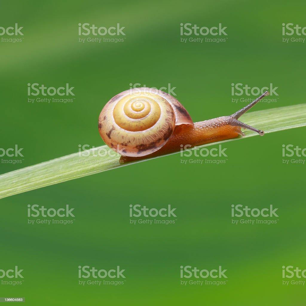 tiny snail on grass stock photo