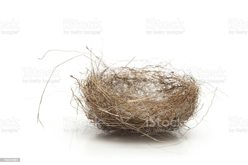 Tiny Soft Nest stock photo