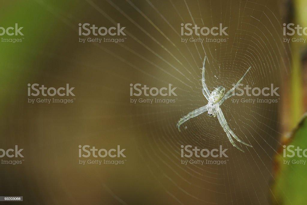 Tiny Spider on the web stock photo