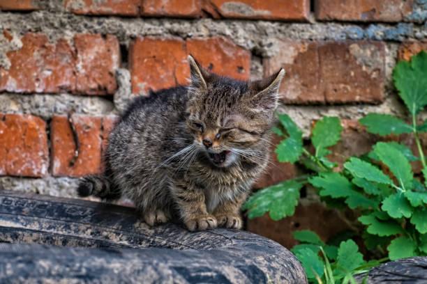 Tiny stray kitten with sore eyes stock photo