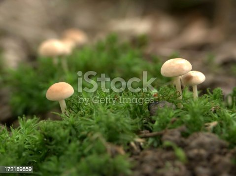 Tiny unidentified toadstools---Any comments hugely appreciated!!---