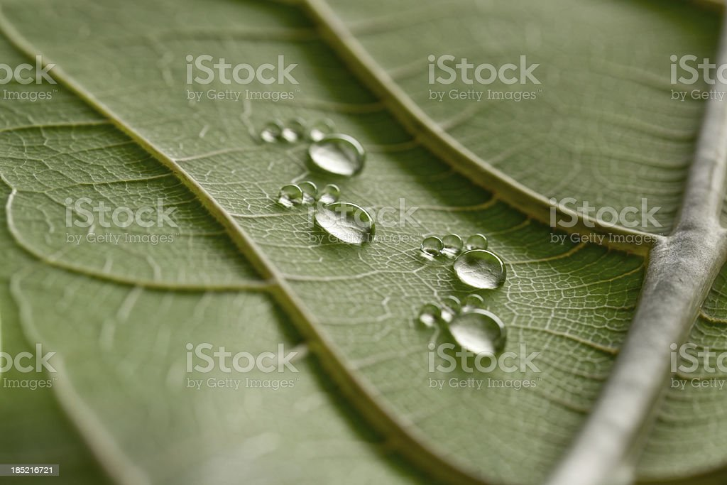 tiny water drop footprints on leaf stock photo