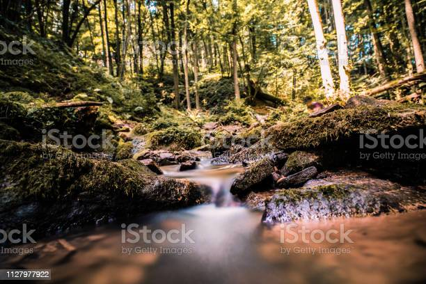 Photo of Tiny waterfall in a forest