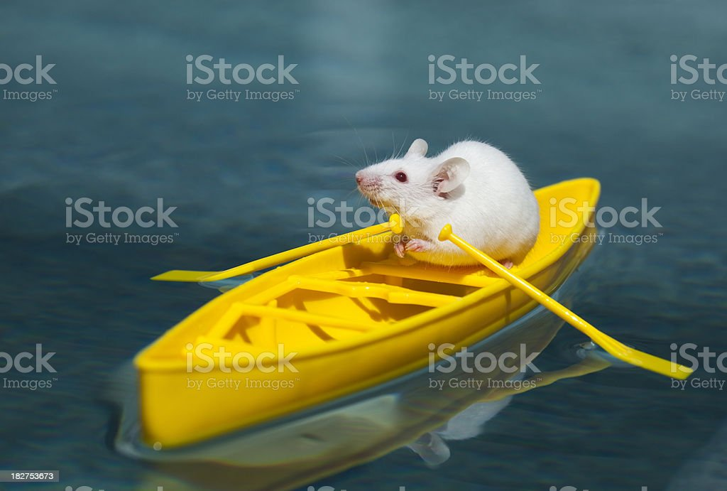 Tiny White Mouse Explorer in Yellow Canoe Surveys Tropical Waters royalty-free stock photo