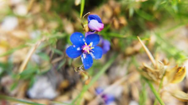 Winzigen Wildblumen – Foto
