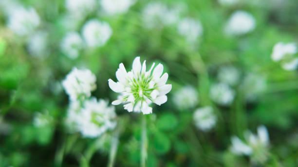 Winzige Wildflower – Foto