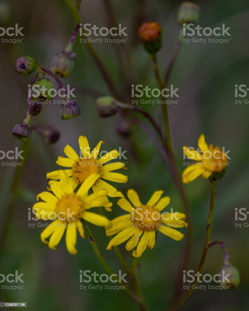 Tiny Yellow Flowers in the grass stock photo