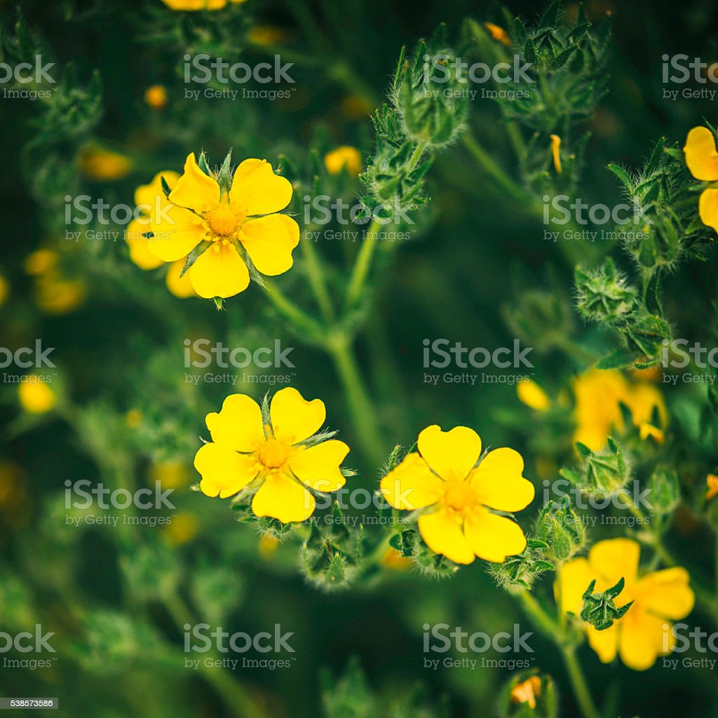 Tiny Yellow Flowers With Defocused Background Stock Photo More