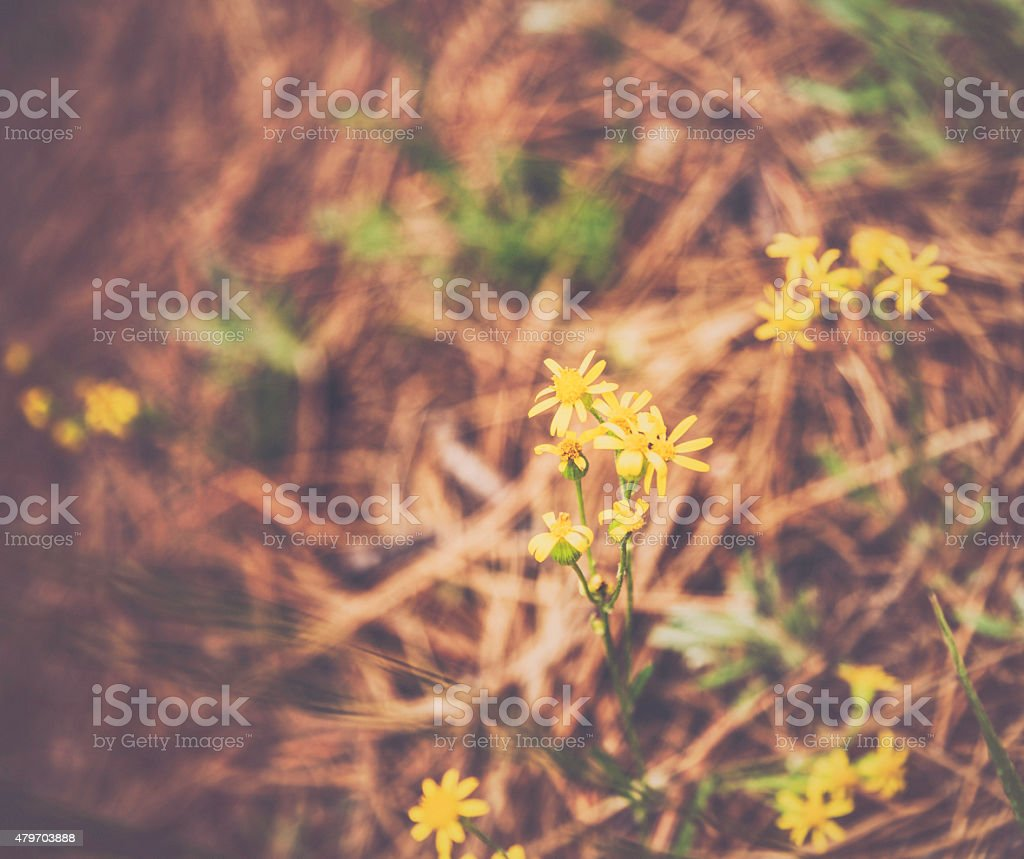 Tiny yellow wildflowers growing on forest floor stock photo