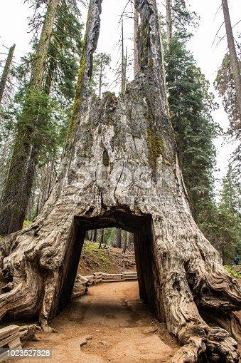 Eine Fahrt auf der Tioga Road bietet viele spektakuläre Landschaften wie die Tuolumne Meadows, die Tuolumne Grove of Giant Sequoias und Ausblicke auf den Half Dome im Yosemite Valley.