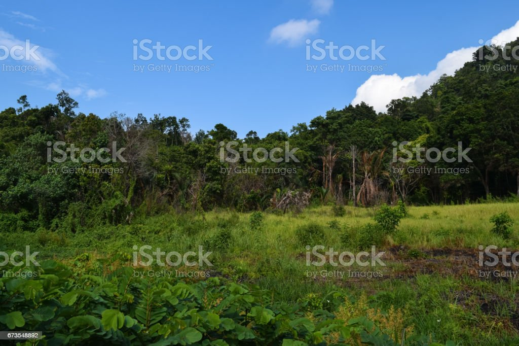 Tioman island beautiful wild nature. Landscapes and Flora of Malaysia royalty-free stock photo