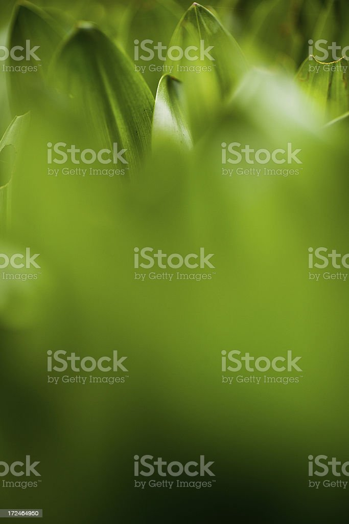 Tips of Leaves royalty-free stock photo