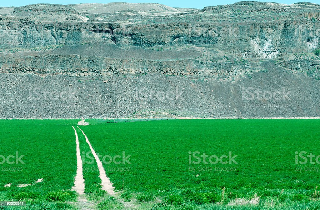 Tire tracks through field to irrigation equipment in Washington state royalty-free stock photo