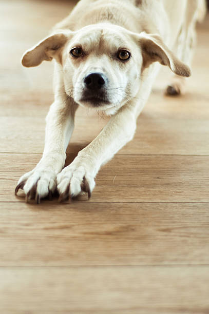 Tired dog stock photo
