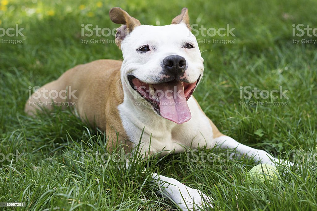 Tired dog stock photo