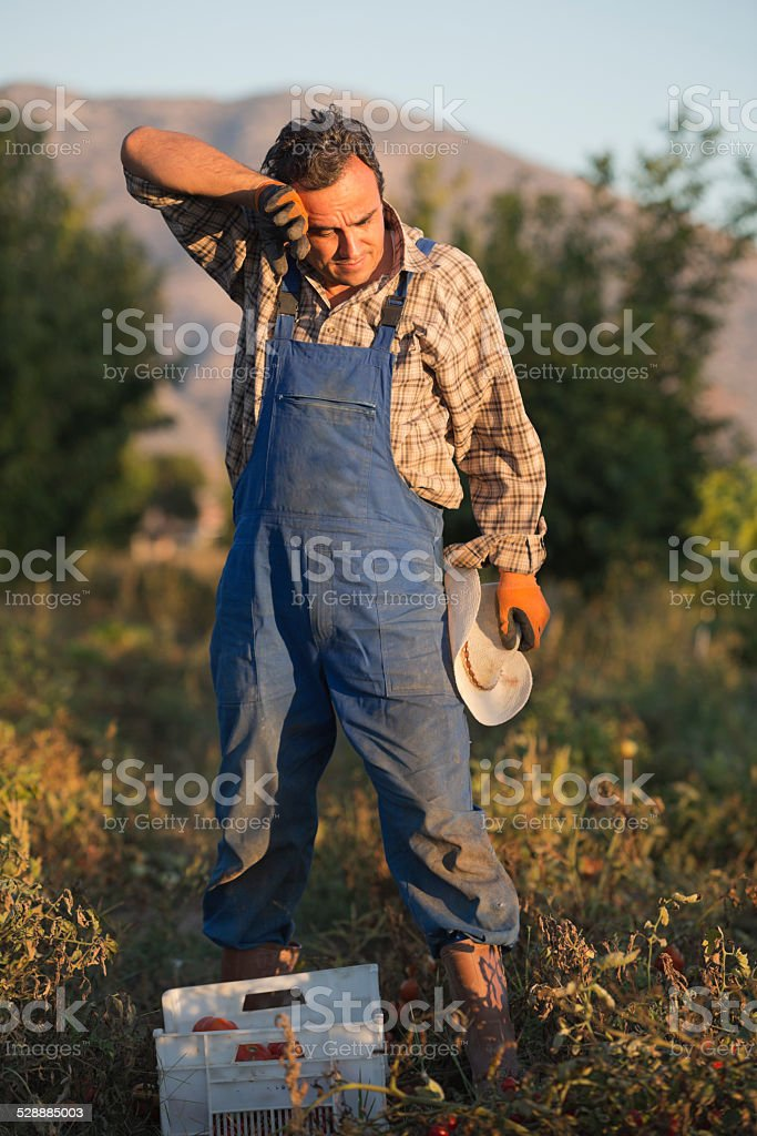 Tired farmer clearing his sweat stock photo