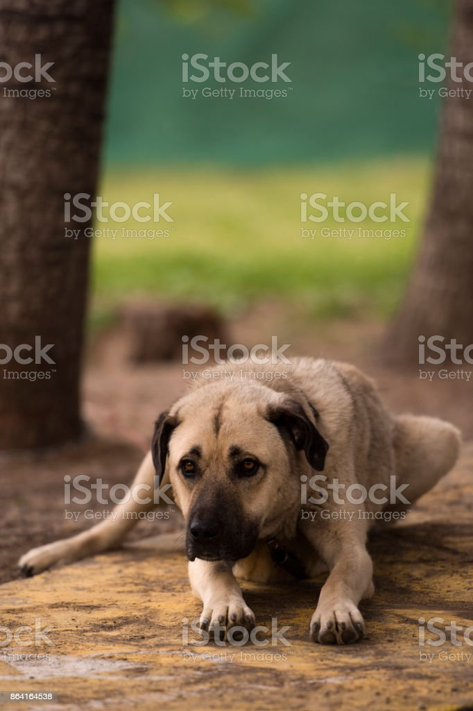 Tired Friend royalty-free stock photo