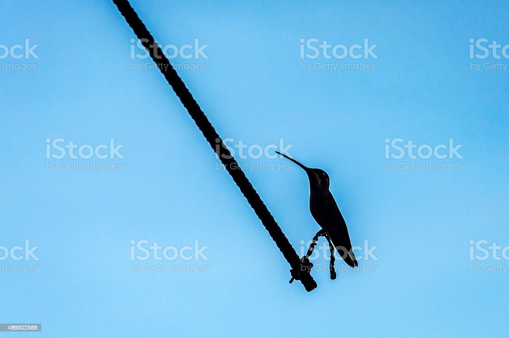Müde hummingbird – Foto
